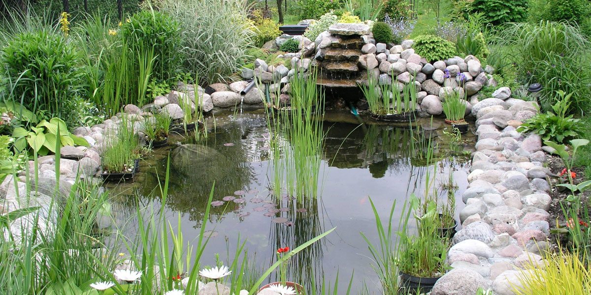 Green in 2015 for Ornamental fish pond maintenance
