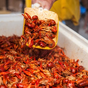 Crawfish-Being-Served