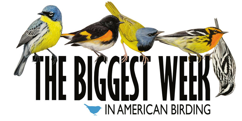 BiggestweekinBirding