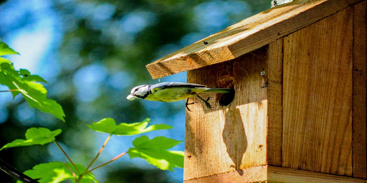 Bird-Houses-Avian