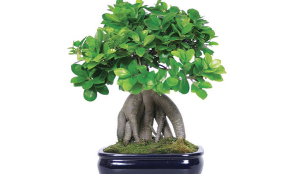 bonsai-workshop