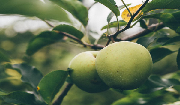 apple-butter-festival