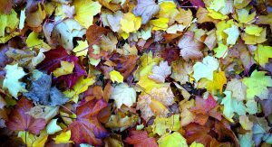 fall-festival-toledo